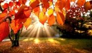 Séminaire à l'automne