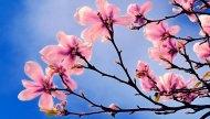 Séminaire au printemps