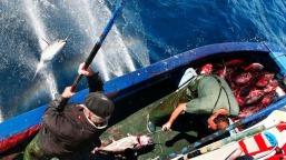 Pêche au thon à la ligne
