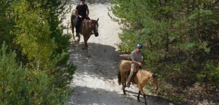 Team building : ballade à cheval à Fontainebleau